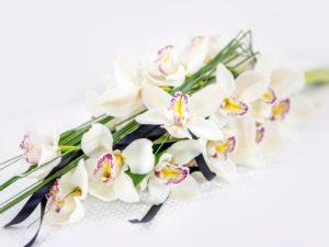 Kasileinakimp-orhideega